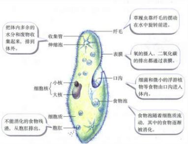 细胞膜,细胞质,细胞核