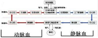 【题文】下图是血液循环和气体交换示意图,请据图回答图片