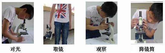 试题分析:光学显微镜的使用步骤