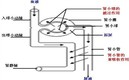 电路 电路图 电子 原理图 414_259