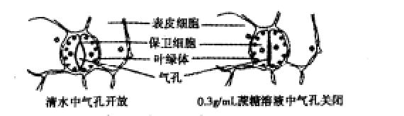 电路 电路图 电子 原理图 570_164