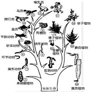 初中生物试题 生物圈中的人 下列关于动物进化历程的叙述,错.