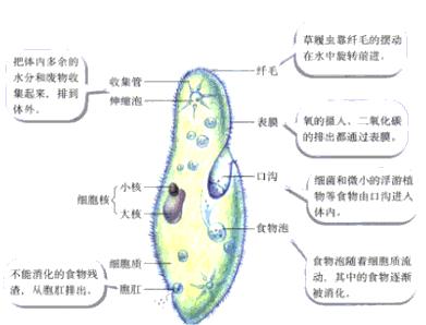 初中生物试题 生物体的结构层次