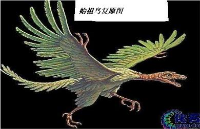 它的身体结构既和爬行动物有相似之处