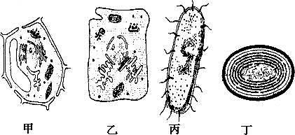 细胞是生物体结构和功能的基本单位