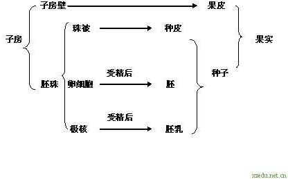 分析:此题考查花的结构