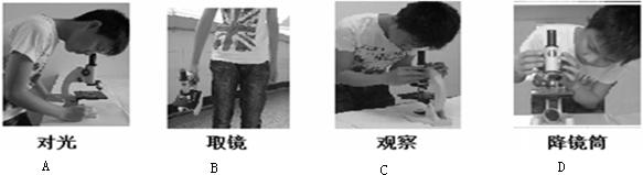 【题文】下图是使用显微镜的操作步骤,其中正确的操作