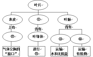 【题文】下图为叶片结构和功能的概念图