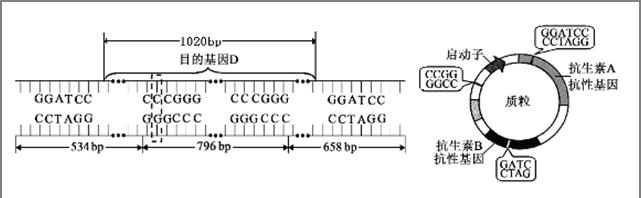 电路 电路图 电子 原理图 641_198