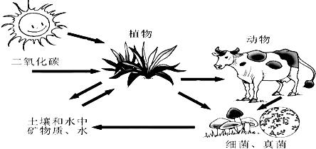 动物与植物通过 (捕食与被捕食)关系形成食物链.