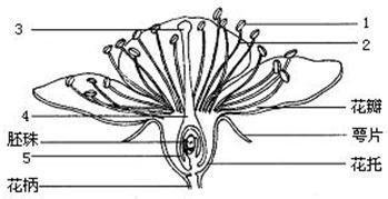 图是桃花的结构示意图. 1 写出下列各个序号所示结构的名称 ① ② ④