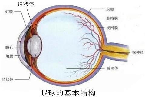 如图是眼球的结构,填出各结构的名称