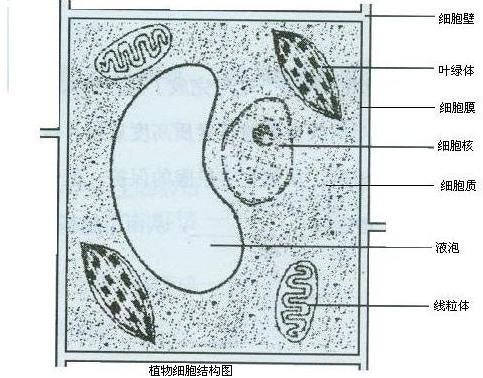请画出植物细胞的结构简图及标各部分结构名称