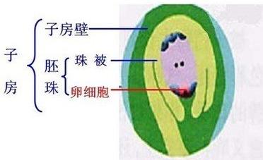 花的基本结构图示意图