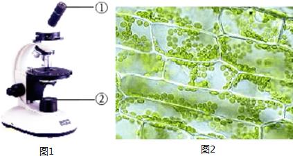 (2)下图是孙悟同学使用显微镜的四个操作步骤图,请你排列好正确的顺序