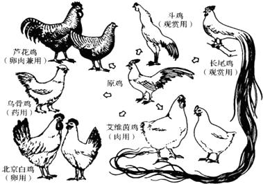 萌鸡小队钢琴简谱