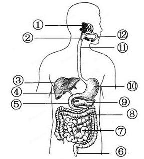 初中生物试题 消化道的组成 根据如图,分析回答下列问题:(.