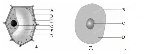 初中生物试题 动物细胞的结构 细胞生命活动的控制中心是___.