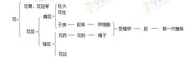 (6分)下图是花的结构和果实的结构及来源示意图.