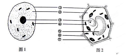 下图示动,植物细胞结构模式图,据图回答下列问题