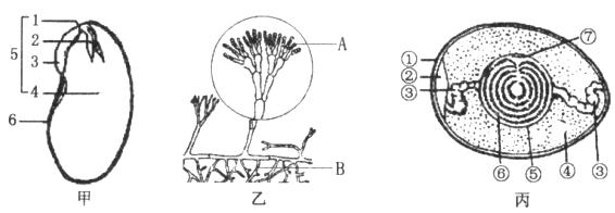 下图是各种生物与生殖发育有关的结构示意图,请分析回答问题.