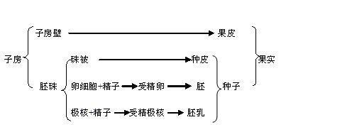 植物种子的主要结构是由什么发育而来的 a.子房壁 b.