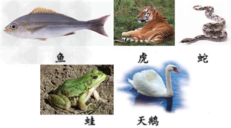 动物的分类 认真观察下列图表