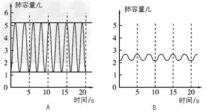 下图中两曲线图表示一个人在两种状态下的呼吸情况.请分析回答