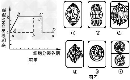 图甲是植物细胞有丝分裂一个细胞周期中核内染色体及